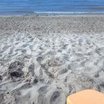 Egg Harbor Beach sand image